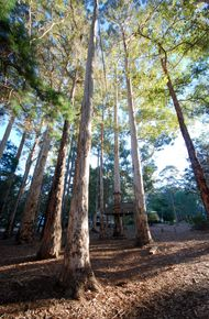 A Special Little Place In The Forest... - Donnelly Village - Donnelly River