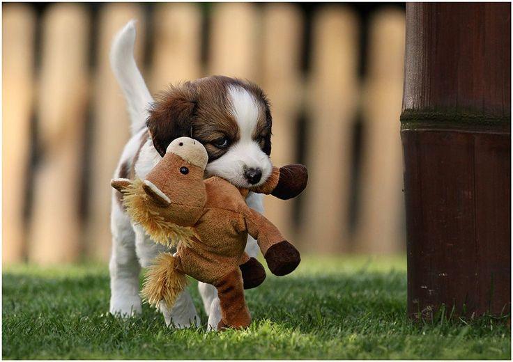 A pup's best friend.