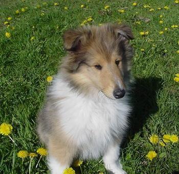 Adopt Dali On Hunde