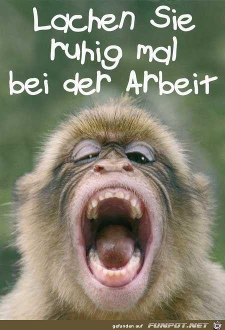 lustiges Bild 'Lachen .jpg'- Eine von 23344 Dateien in der Kategorie 'witzige Bilder' auf FUNPOT.