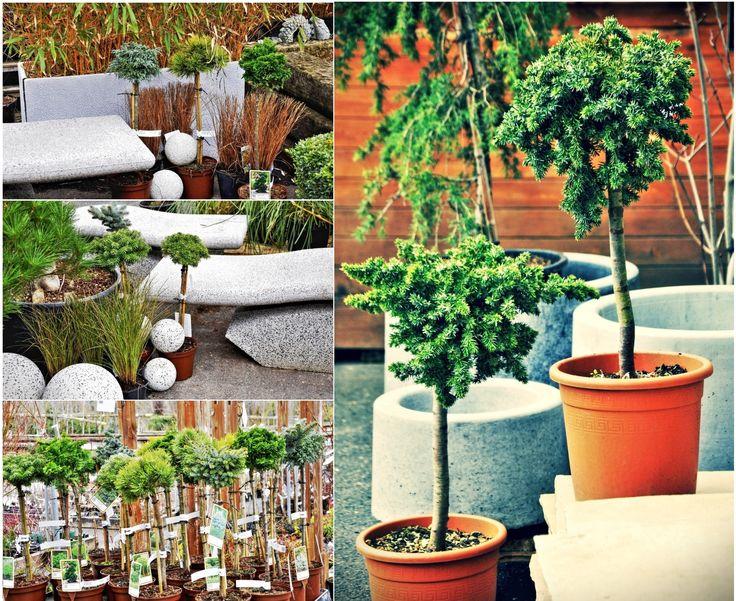V nabídce konifer máme velký výběr druhů, kultivarů, tvarů a barev.