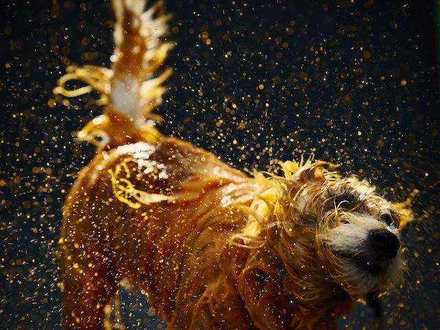 Artistic Dog Solidarity Movement – Fubiz Media