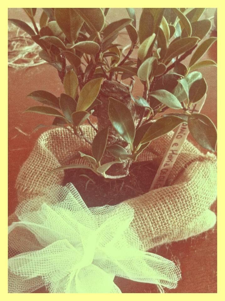 Bonsai, vintage wedding favors, gift, diy, kraft