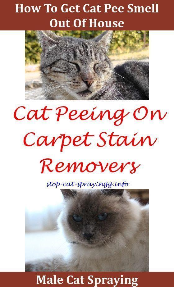 Cat Spray Ideas Smell Removal Bat Urine Remes Furniture Home Behavior Problems