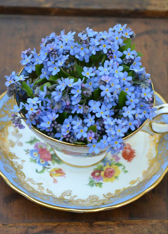 10 Spring Wedding Flower Favorites: Forget Me Not. This plant bears tiny but exquisite light blue blooms.