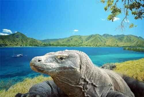 Rencanakan dana liburan untuk melihat keindahan Pulau Komodo agar perjalanan Anda hemat dan murah. Di artikel ini, Anda dapat mengetahui tips serta kiat-kiat liburan ke Pulau Komodo agar tidak bikin kantong hangus.