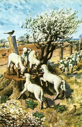 Lambs, illustration by C. F. Tunicliffe for the Ladybird book 'What to look for in Spring', 1961.