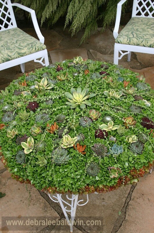 Succulent Table Top Garden Succulents Container