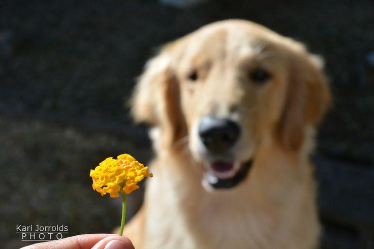 Plantas tóxicas para Perros! Toxic plants for dogs.
