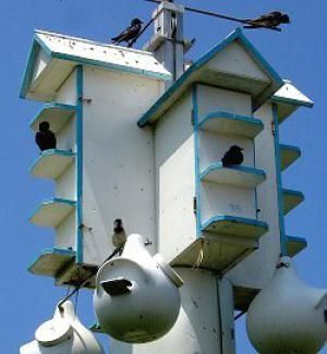 Purple Martin Houses: Purple martin houses accommodate many birds.