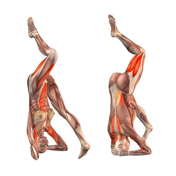 Headstand on right foot - Ekapada Sirsasana right - Yoga Poses   YOGA.com
