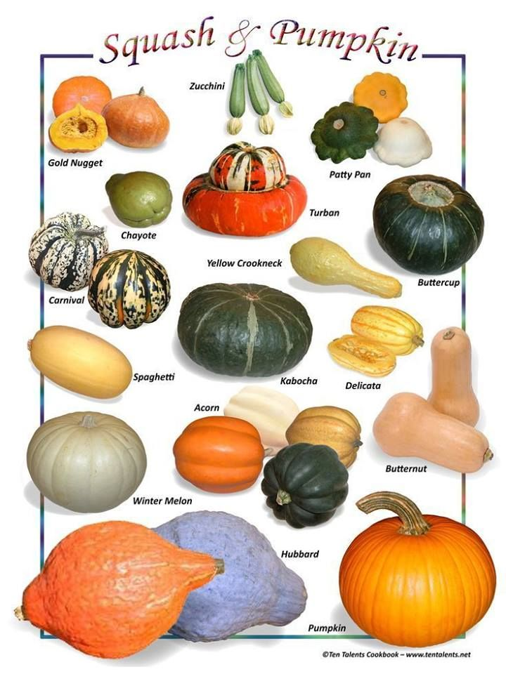 Pumpkin Squash Varieties Chart With Images Squash Varieties