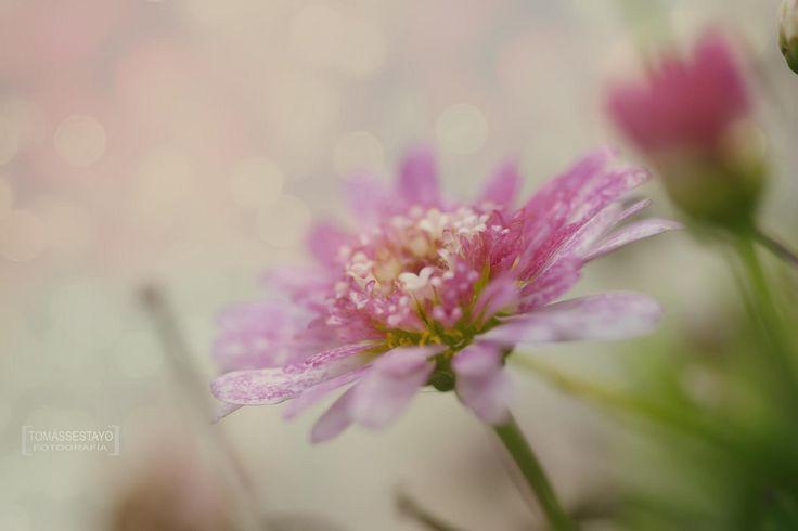 Nuevo album [Some flowers] en: http://www.tomas-sestayo.es/#!/page_Portfolio