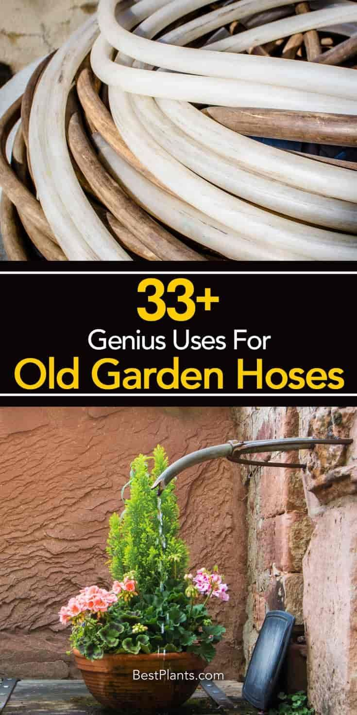 Most serious gardeners, use old water hoses in creative ways long ...