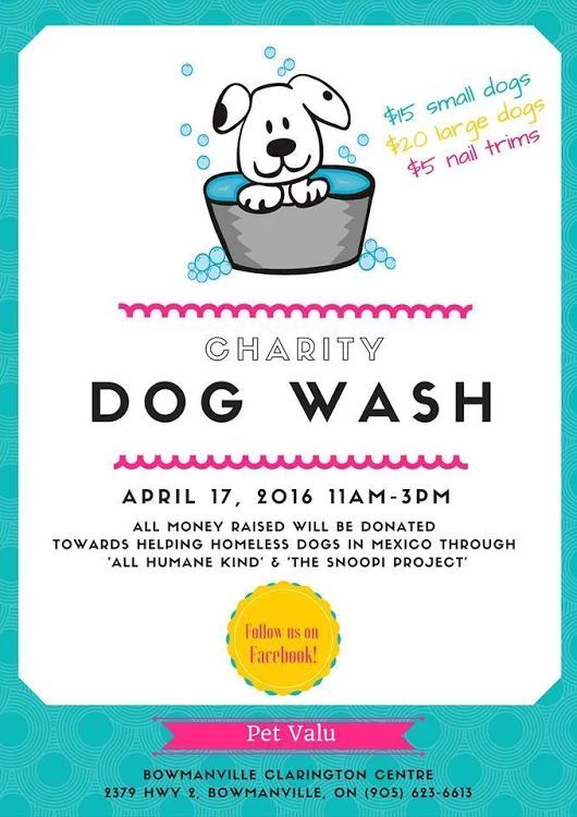 Car Washing Tips And Tricks Dog Wash Fundraising Fundraising