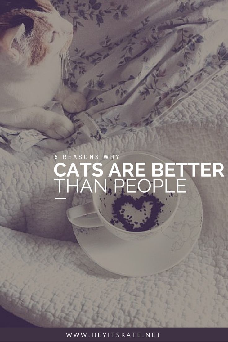 Hey, It's Kate: 5 Reasons Why Cats Are Better Than People   Cats rule, people drool. Here are five reasons why cats are better than people.