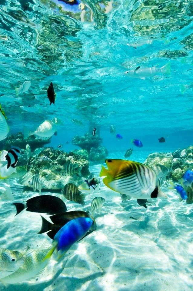 Watch enchanting coral reefs and fascinating exotic marine life on a Glass Bottom Boat tour on a holiday to the Bahamas! #royalcaribbean #underwater