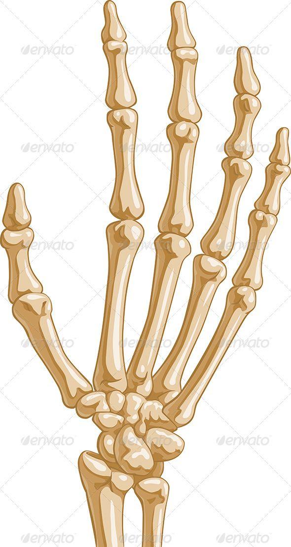 three bones in thumb