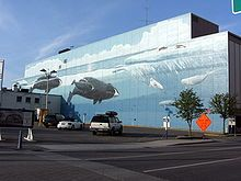 The backside of the JCPenney building in downtown Anchorage-- painted with all different kinds of whales!!