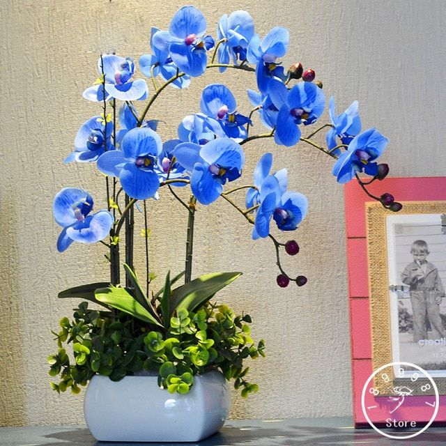 Sale Rare Bonsai Flower Blue Butterfly Orchid Plant Beautiful Garden Phalaenopsis Orchids Best Seeds Online Free Shipping Worldwide Bestseedsonline Com Orchid Seeds Orchid Plants For Sale Flower Seeds