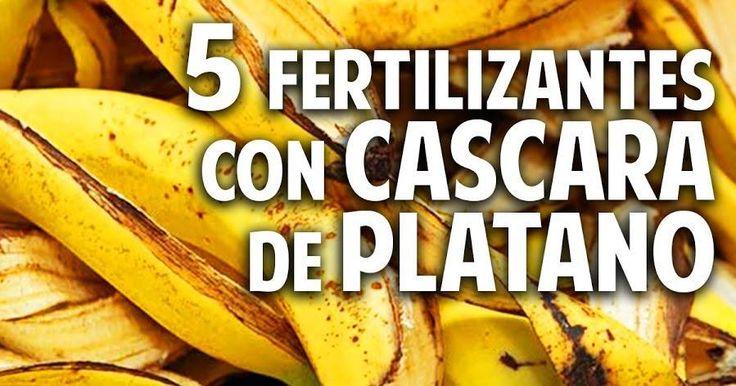 COSAS DEL JARDÍN te cuenta cómo utilizar cáscara de plátano o banana para que tus plantas luzcan más bellas que nunca. 5 usos, 5 maravillas.