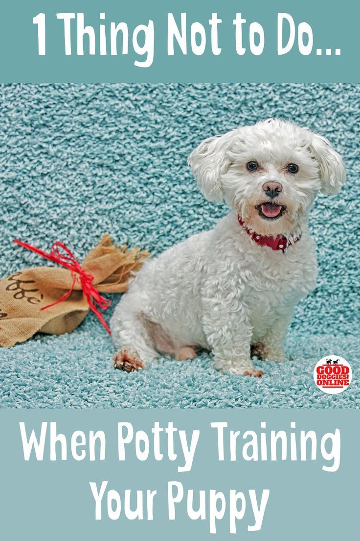 Potty training a puppy can be hard. Check out these puppy training tips to get some help. #puppies #puppytraining