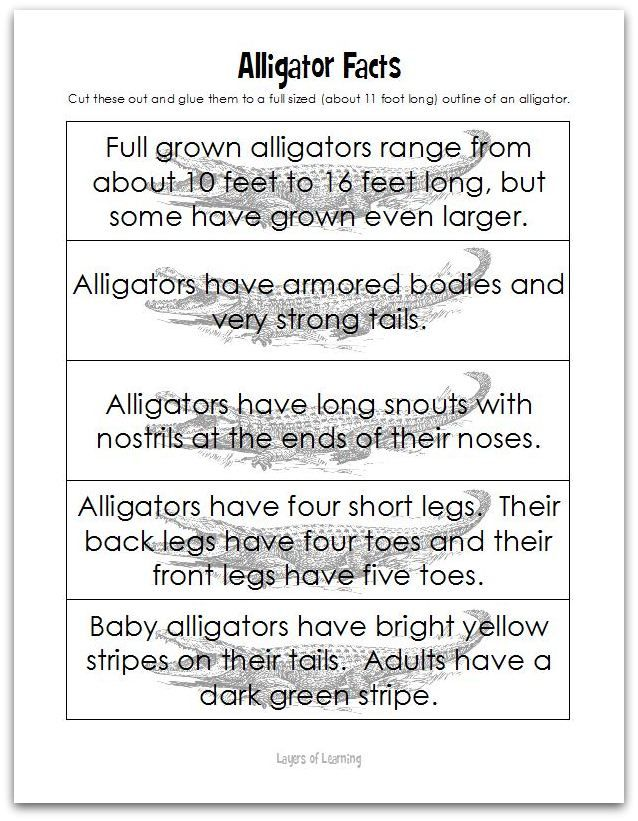Alligator fact printable.  Cut apart the facts and glue them one by one to a full sized outline of an alligator.  This post has an alligator craft on it as well.