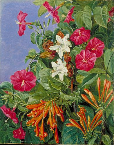 Kew: Marianne North Gallery: Painting 77: Wild Flowers at Morro Velho, Brazil