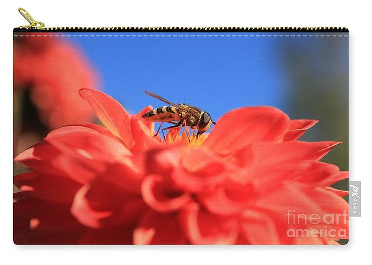 Flowers Fly Carry-all Pouch featuring the photograph Flowers Fly On Dahlia 2 by…