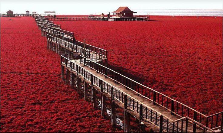 Panjin-czerwonych Beach2