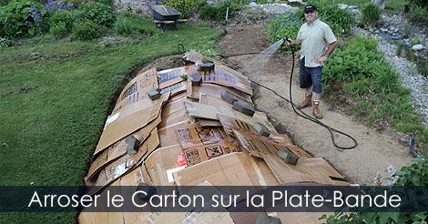 Arroser le carton de la plate-bande pour le maintenir au sol - Guide pour créer une plate-bande carton et brf. Instructions: http://www.jardinage-quebec.com/guide/plate-bande-sans-enlever-gazon/amenager-plate-bande-9.html