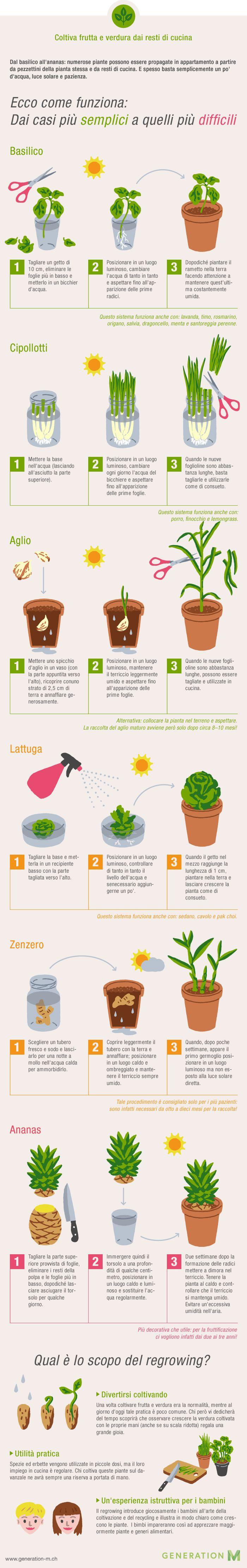 Infografica per coltivare frutta e verdura dai resti di cucina | Generazione M