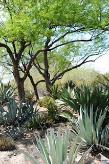 Phoenix Botanical Gardens - we missed the Butterfly Pavilion this year but won't next year!