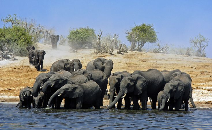 Chobe River, Botswana. Take the river cruise to see an amazing array of mammals, birds and crocodiles.