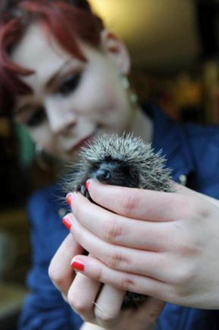 Hedgehog campaign helping prickly friends to prosper