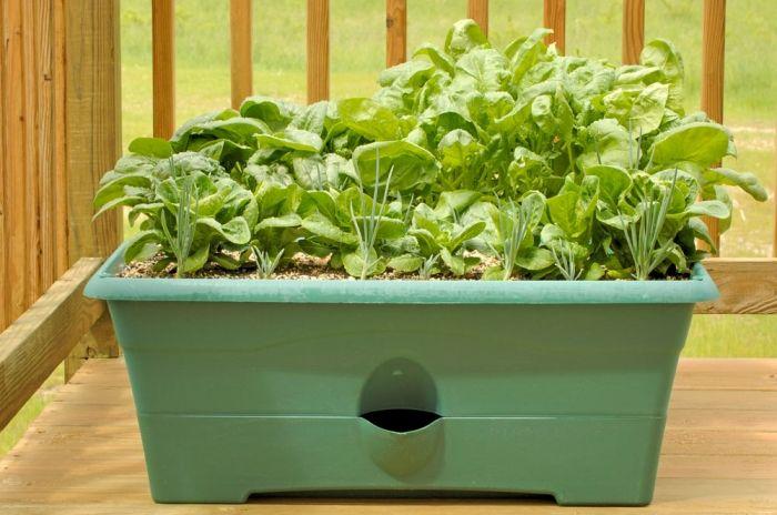 am besten und frischesten schmeckt der salat aus eigenem. Black Bedroom Furniture Sets. Home Design Ideas