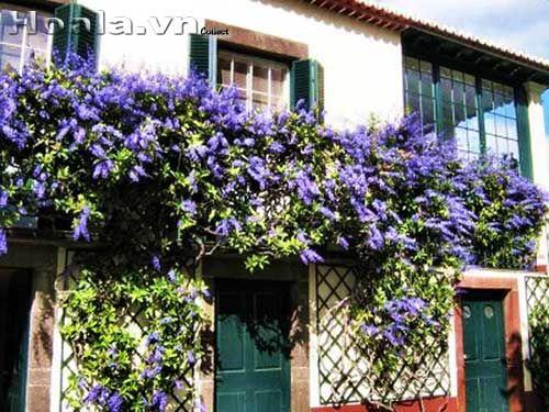 33 Best Hoa Leo Images On Pinterest Beautiful Flowers