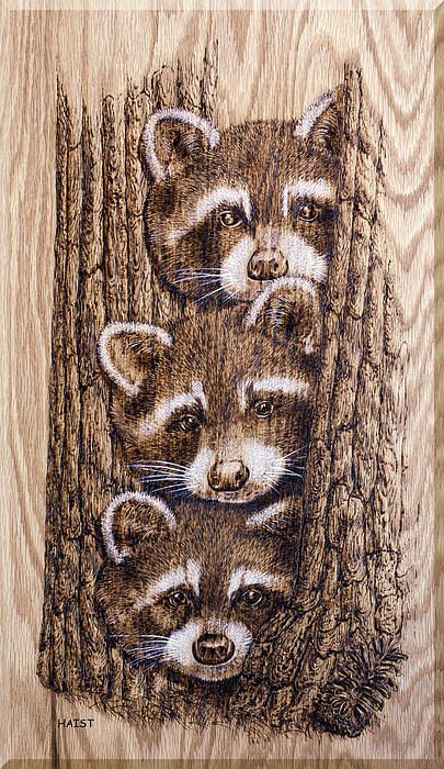 pyrography - raccoons