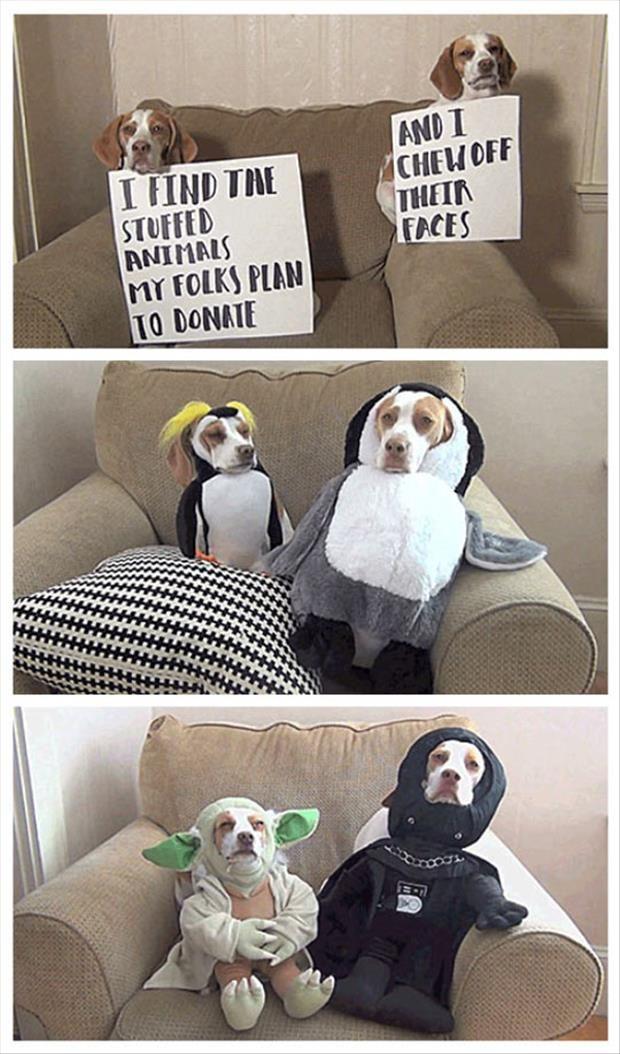 best dog shaming