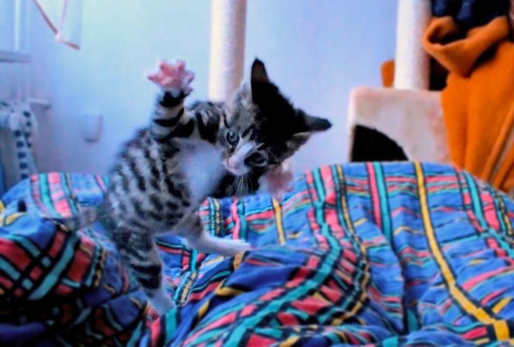 Gato sapeca em câmera lenta.
