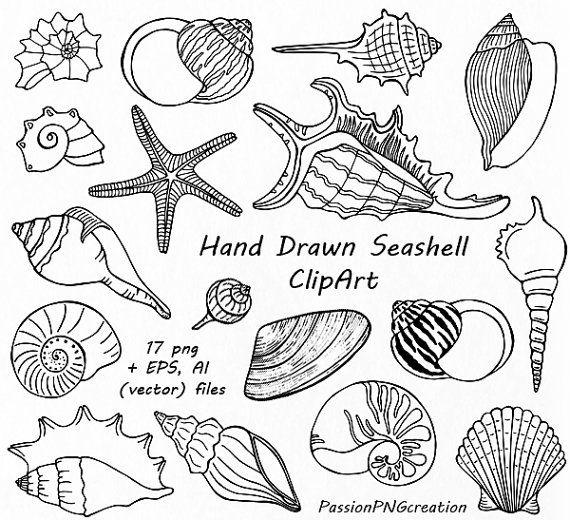 Hand gezeichnet Muschel Clipart, Shell-ClipArt, digitale Briefmarken, Sommer-Strand, PNG, EPS, AI, Vektor Clipart, für persönlichen und kommerziellen Gebrauch