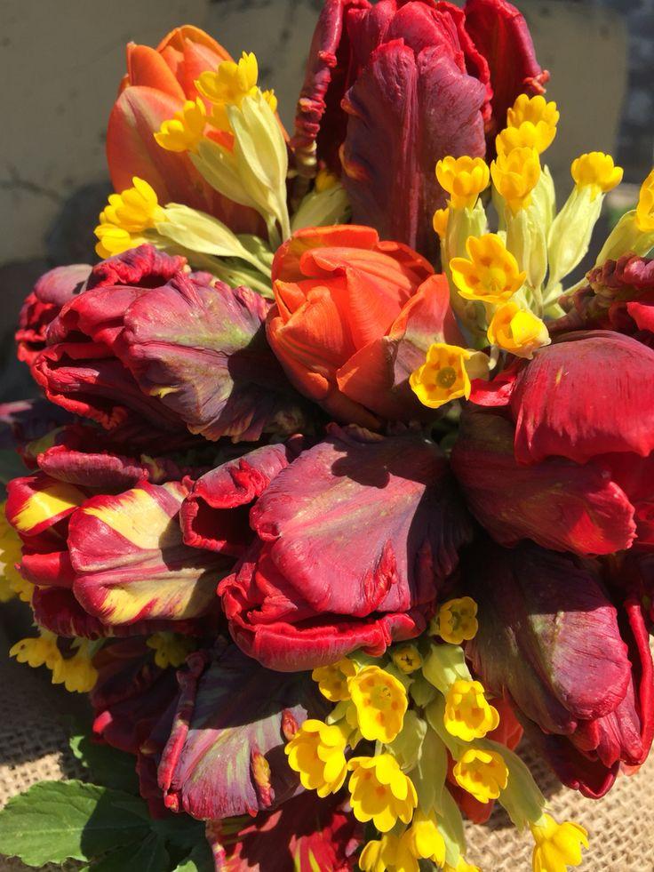 Organic tulips, Rococo and Prinses Irene, and wild Primula veris, vildevioler.dk
