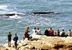 Whale Watching in Hermanus, Self Catering Holiday Accommodation  http://capeletting.com/hermanus/hermanus/eastcliff-cottages-93/ #capeletting