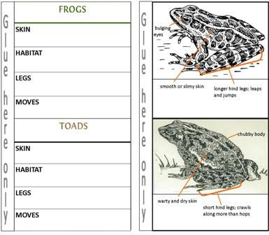 Frog Vs Toad For Kids