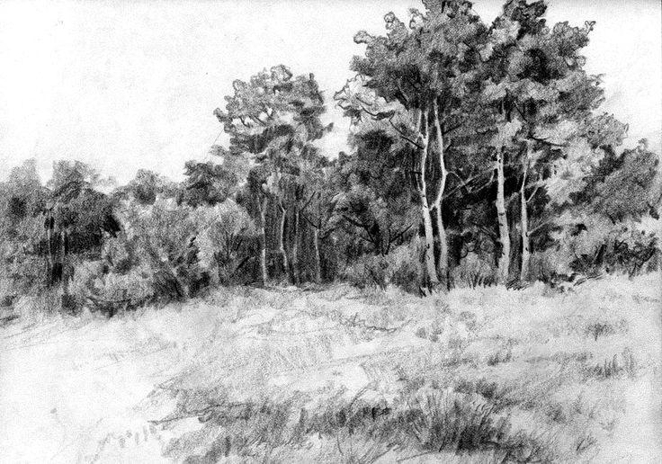 Landscape Drawings in Pencil | Jackknife Aspens pencil sketch by anubistj