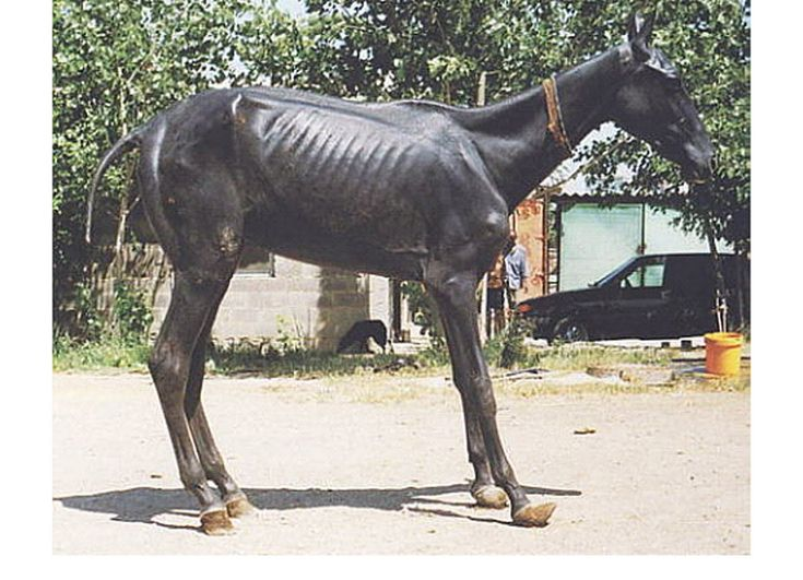 tracerapotts: The Hairless Foal Syndrome. Hairless Teke