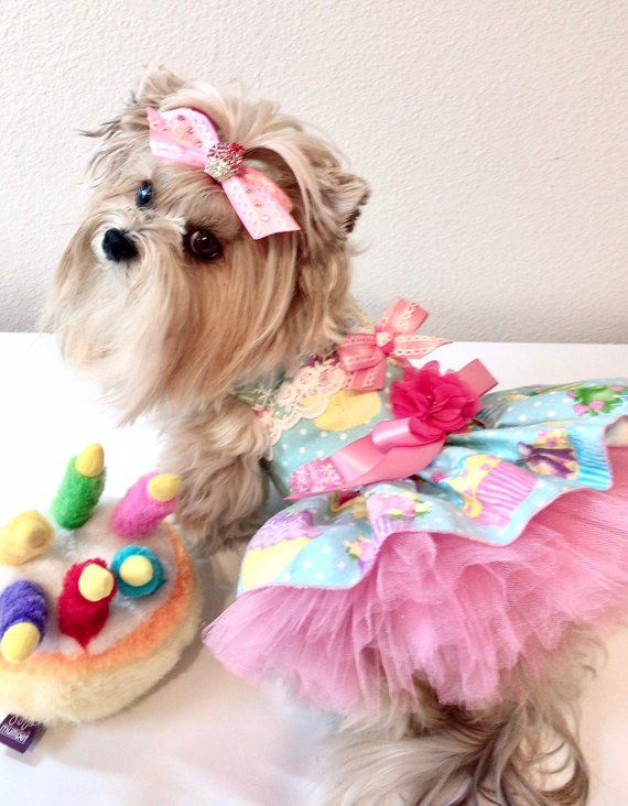 3268c056e383 Cup Cake Birthday dog Dress for your special day! Tutu and luxury flower  Lace dress with lots of detail. Don't forget the Bling Cupcake matching  bow. ...