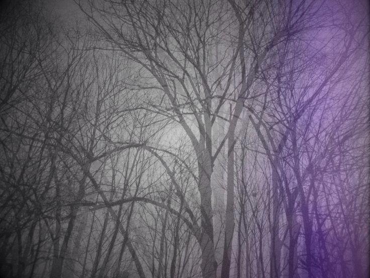 LIVIDI Ombre, raschiate da chissà quale parete, doppie, forse estranee, rapprese in un sogno vitreo, a strati, frutto di una movenza lenta. Lecca le vene da dentro e si schianta sulla pelle, come un edera alimentata da una sintesi di respiri.  Viola come i lividi.    http://paralleluniverseinpolaroid.wordpress.com