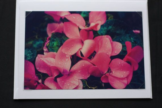 Flowers close up at the greenhouse Greeting by PhotosFromTheLens, $4.00