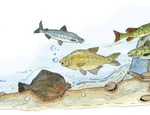 Ruokatieto, kalat vedessä